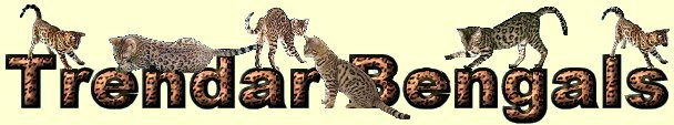 Trendar Bengals Quality affordable exotic spotted bengal kittens for sale